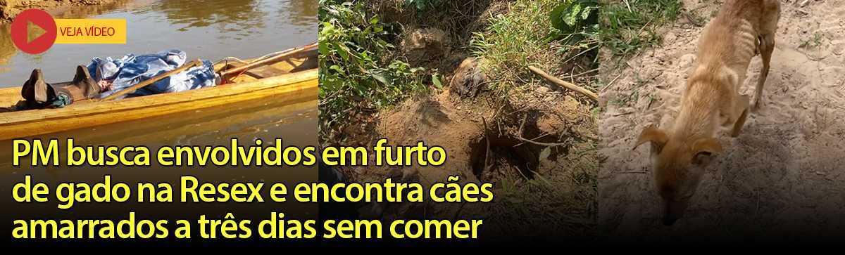 FURTO DE GADO E CAES COM FOME